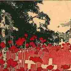 poppies with crosses